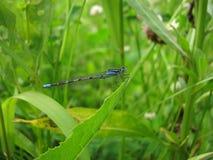 amongst växt- djungel för slända royaltyfria bilder