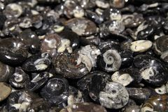 Amonite mineralbakgrund Fotografering för Bildbyråer