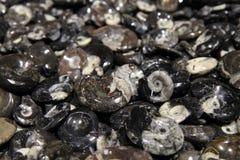 Amonite minerale achtergrond Stock Afbeelding