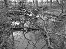 Amontonamiento del Beaver Creek Fotografía de archivo libre de regalías