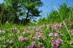 Amorçage d'herbe Photographie stock