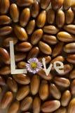 Amor. Imagen de archivo