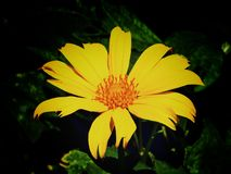 Amor amarillo foto de archivo