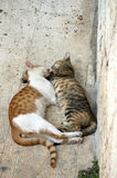 Amor, amor, amor Fotografia de Stock