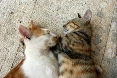 amor, amor, gatos Foto de archivo libre de regalías