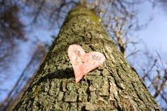 Amor cada vez mayor Imagenes de archivo