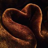 Amor caliente Imágenes de archivo libres de regalías