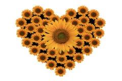 Amor com flor do sol imagens de stock