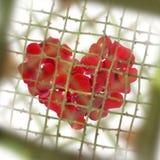 Amor con las espinas Foto de archivo libre de regalías