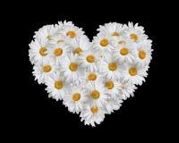 Amor, corazón de margaritas foto de archivo libre de regalías