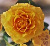 Amor Día del `s de la tarjeta del día de San Valentín Imagen de archivo