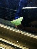 Amor da borboleta fotografia de stock royalty free