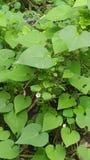 Amor da floresta em Nigéria África fotografia de stock