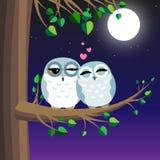 Amor das corujas ilustração royalty free