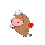 Amor de Bull Foto de archivo