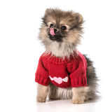 Amor de cachorrinho Imagens de Stock