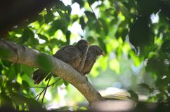 Amor de dois pássaros na árvore imagens de stock royalty free