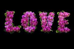 Amor de flores y de hojas de orquídeas con descensos de rocío Fotos de archivo libres de regalías