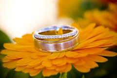 Amor de florescência Fotos de Stock Royalty Free