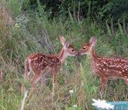 Amor de la fauna Foto de archivo