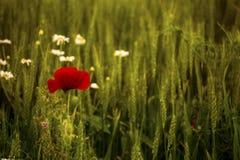 Amor de la naturaleza Foto de archivo
