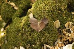 Amor de la naturaleza: 2 hojas en forma de corazón en fondo del musgo Foto de archivo libre de regalías