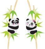 Amor de la panda ilustración del vector