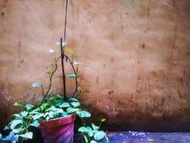 Amor de la planta Fotografía de archivo libre de regalías