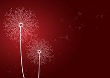 Amor de la puerca de las flores. Imagenes de archivo