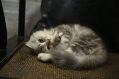 Amor de los gatitos a dormir imagen de archivo libre de regalías