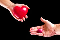Amor de los pares en las palmas Imagen de archivo libre de regalías