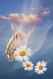 Amor de pensamiento Foto de archivo libre de regalías