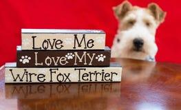 Amor de Terrier Foto de Stock