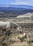 Amor del caballo salvaje del lavabo de la arena Imagen de archivo