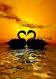 Amor del cisne en la puesta del sol Fotografía de archivo