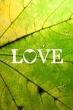 Amor del concepto. Imagen de archivo libre de regalías