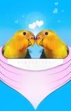 Amor del corazón del amor de los Lovebirds usted junto luna de miel Foto de archivo