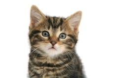 Amor del gatito Fotografía de archivo libre de regalías