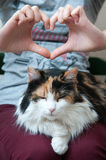 Amor del gato Imágenes de archivo libres de regalías