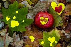 Amor del granate en tiempo del otoño Fotos de archivo libres de regalías