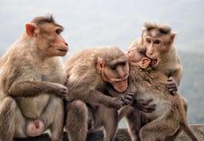 Amor del mono Fotos de archivo libres de regalías