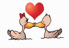 Amor del pato Foto de archivo