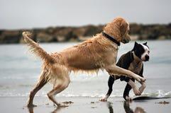 Amor del perro fotografía de archivo libre de regalías