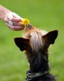 Amor del perro Fotografía de archivo