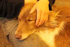 Amor del perro Fotos de archivo libres de regalías