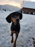 Amor del perro foto de archivo libre de regalías