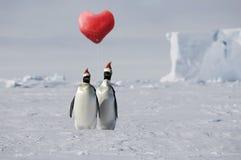 Amor del pingüino Foto de archivo