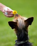 Amor do cão fotografia de stock
