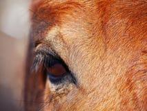 Amor do cavalo Imagens de Stock