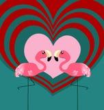 Amor do flamingo dos pares Fotografia de Stock Royalty Free